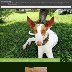 FRUITS ET LEGUMES BARF - Site de vismedicatrixnaturae ! La nature est guerisseuse - Remedes naturels pour chiens et chats
