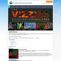 Special Report - International Science and Engineering Visualization Challenge