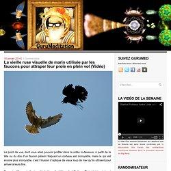 La vieille ruse visuelle de marin utilisée par les faucons pour attraper leur proie en plein vol (Vidéo)