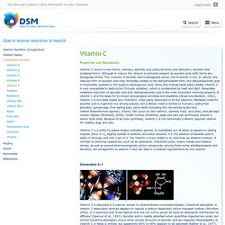 Vitamin C - Companion animals - Compendium - DSM