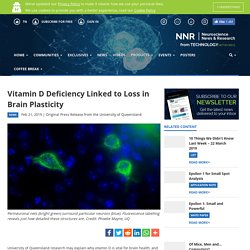 Vitamin D Deficiency Linked to Loss in Brain Plasticity