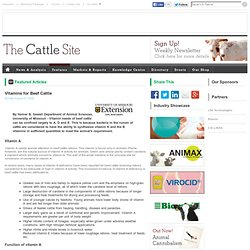 Vitamins for Beef Cattle