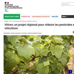 MAA 23/06/20 Vitirev, un projet régional pour réduire les pesticides en viticulture