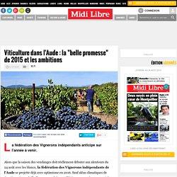 """Viticulture dans l'Aude : la """"belle promesse"""" de 2015 et les ambitions"""