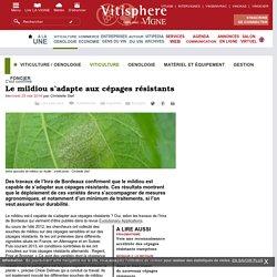 VITISPHERE 25/05/16 C'est confirmé - Le mildiou s'adapte aux cépages résistants