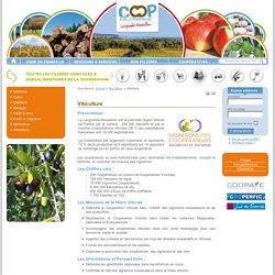 Viticulture - Coop de France Languedoc Roussillon