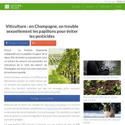 MAXISCIENCES 18/04/10 Viticulture : en Champagne, on trouble sexuellement les papillons pour éviter les pesticides