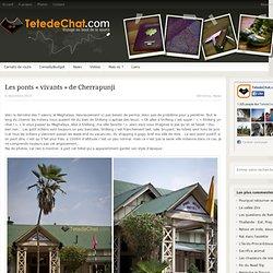 Les ponts «vivants» de Cherrapunji - Inde, voyage - TetedeChat.com