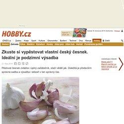 Zkuste si vypěstovat vlastní český česnek. Ideální je podzimní výsadba