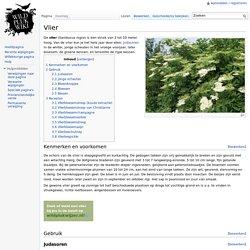 Vlier - Wildpluk wiki