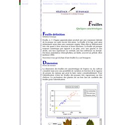 vocabulaire des feuilles