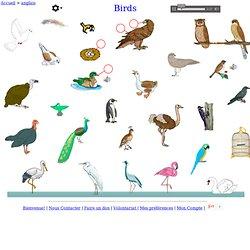 les oiseaux - anglais Vocabulaire