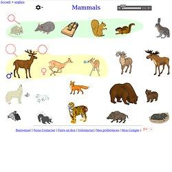 les mammifères - anglais Vocabulaire