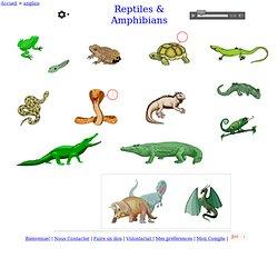 les reptiles et les amphibiens - anglais Vocabulaire
