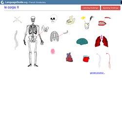 French: Vocabulary Guide: The Body II   Body II - StumbleUpon