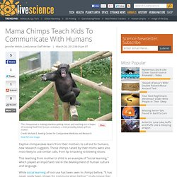 Mothers Teach Chimp Kids 'Words'