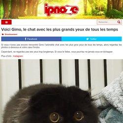 Voici Gimo, le chat avec les plus grands yeux de tous les temps