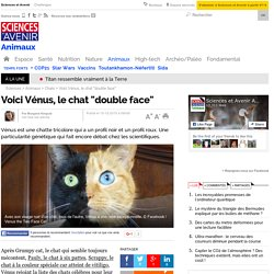 "Voici Vénus, le chat ""double face"""