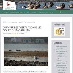 Où voir les oiseaux dans le golfe du Morbihan