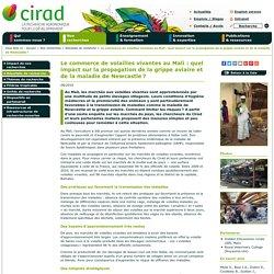 CIRAD - AOUT 2016 - Le commerce de volailles vivantes au Mali : quel impact sur la propagation de la grippe aviaire et de la maladie de Newcastle?