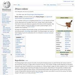 Draco volans