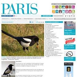 Voleuse la pie bavarde ? - Paris.fr-Mozilla Firefox