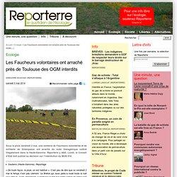 Les Faucheurs volontaires ont arraché près de Toulouse des OGM interdits