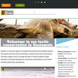 Volunteer in sea turtle conservation in Guatemala-