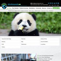 Enjoy an Interesting Panda Volunteering Program