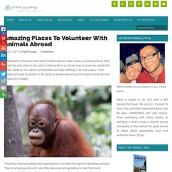 Amazing Places To Volunteer With Animals Abroad