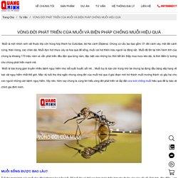 Vòng đời phát triển của muỗi và biện pháp chống muỗi hiệu quả