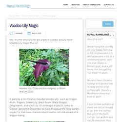 Voodoo Lily Magic – Rural Ramblings…
