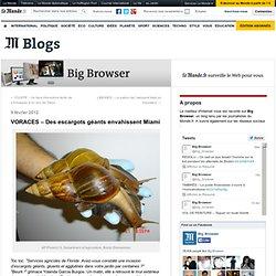 VORACES – Des escargots géants envahissent Miami