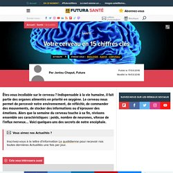 Votre cerveau en 15 chiffres clés