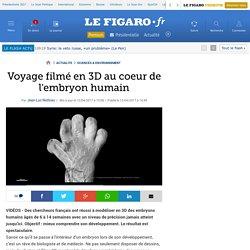 Voyage filmé en 3D au coeur de l'embryon humain