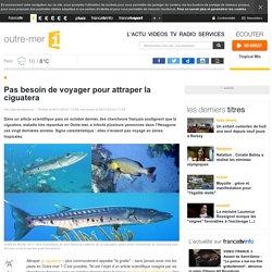 FRANCETVINFO LA 1ERE OUTRE-MER 29/11/14 Pas besoin de voyager pour attraper la ciguatera
