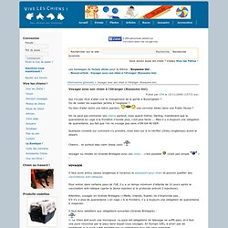 Voyager avec son chien à l'étranger (Royaume Uni) - Informations générales - Articles Chien, Vive les chiens
