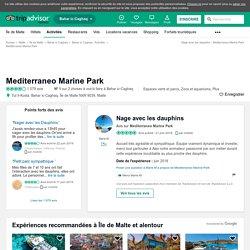 Nage avec les dauphins - Avis de voyageurs sur Mediterraneo Marine Park, Bahar ic-Caghaq