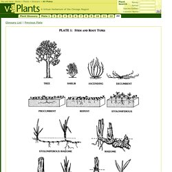 Plant Glossary All Plates