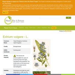 Echium vulgare Viper's Bugloss, Common viper's bugloss PFAF Plant Database