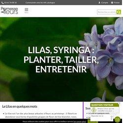 Lilas, syringa vulgaris : planter, tailler et entretenir - Nos conseils - Blog Promesse de fleurs