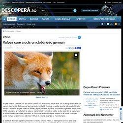 Vulpea care a ucis un ciobanesc german
