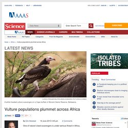 Vulture populations plummet across Africa