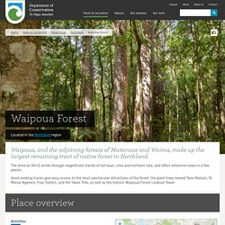 Waipoua Forest: Places to go in Northland