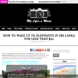How to Wake up to Elephants in Sri Lanka for Less Than $50 - My Life's A Movie