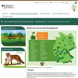 Bekannte deutsche Waldgebiete - Unser Waldkulturerbe