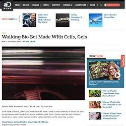 Walking Bio-Bot Made WIth Cells, Gels