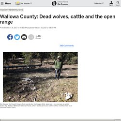 Wallowa County: Dead wolves, cattle and the open range