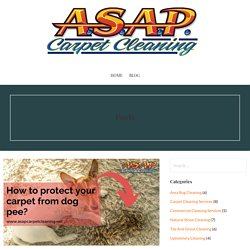 Want to Know How To Protect Your Carpet From Dog Pee?