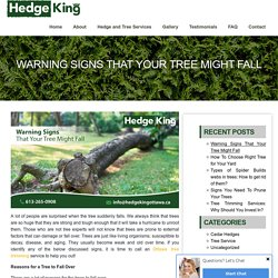 Warning Signs That Your Tree Might Fall